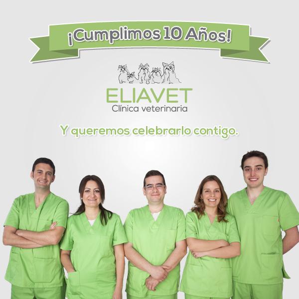 cumplimos 10 años eliavet clínica veterianaria la eliana