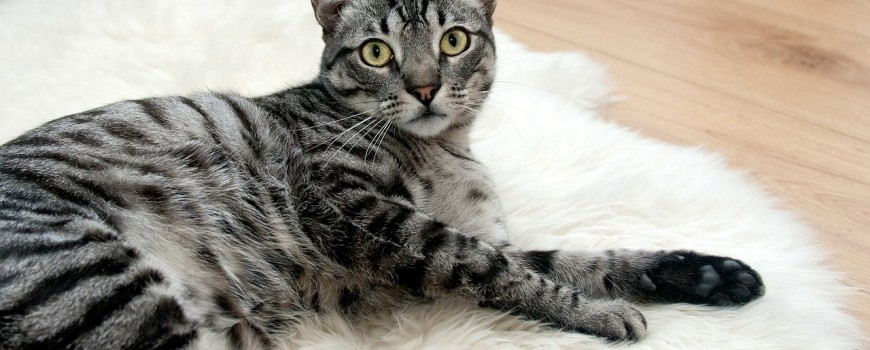 cat-468232_1280