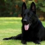 Leishmaniosis, una de las enfermedades más comunes en perros