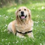 Campaña de Desparasitación Canina y Felina